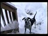 А снег скрипит!!! Очень весело.